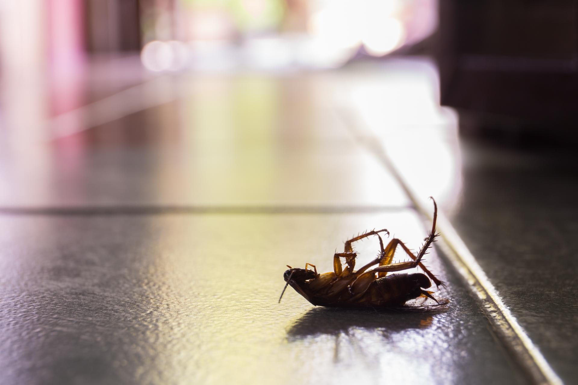 Cockroach Control, Pest Control in Tulse Hill, West Norwood, SE27. Call Now 020 8166 9746